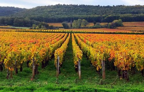 Vignes vignobles chateau de marsannay stephane pochard 1200x770